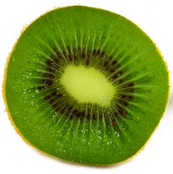 090223kiwifrucht