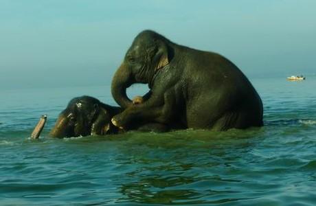 090318elefanten