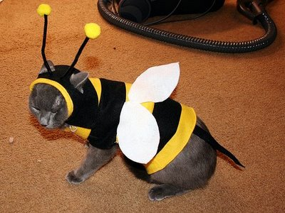 090730cat-bee-costume
