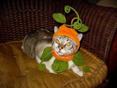 090730cat-fairy-costume
