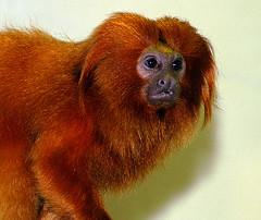 090731orange_monkey