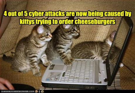 090818kittens-try-to-order-burgers