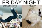 Die Wahrheit über Freitagnacht
