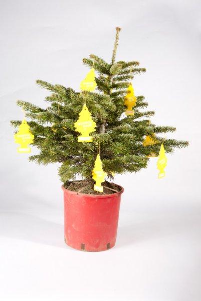 weihnachtswunderbaum
