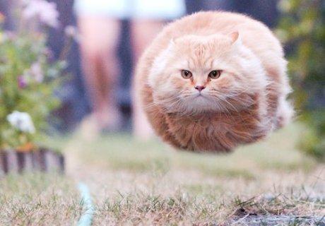 maglev cat