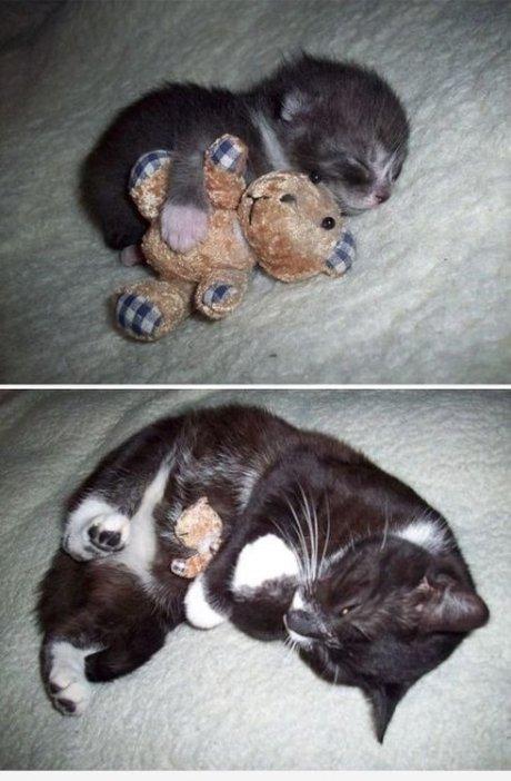 teddycat 1