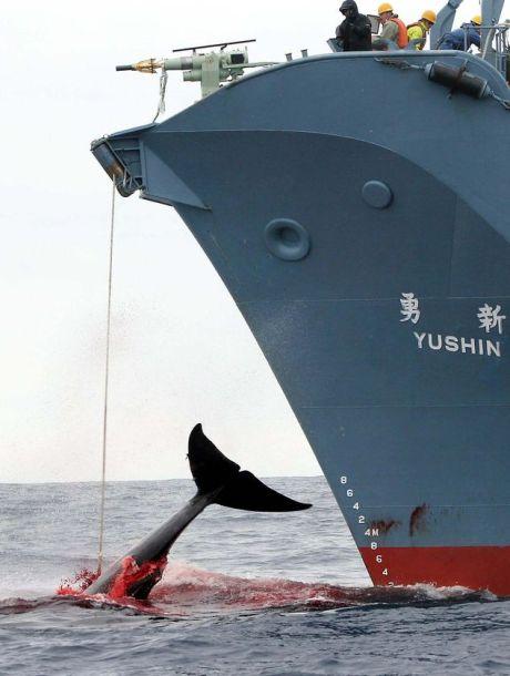 whale-greenpeace-image