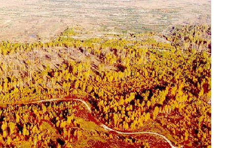 chernobyl red forest