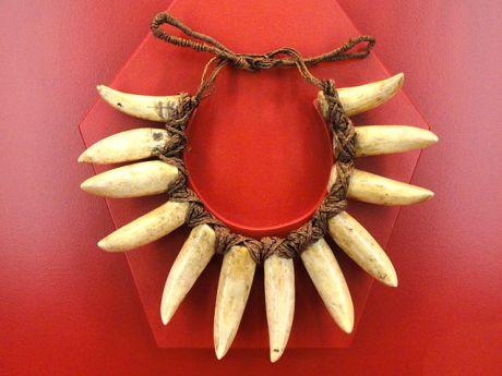 640px-Necklace,_sperm_whale_teeth,_Fiji,_c_1895_-_Staatlichen_Museums_für_Völkerkunde_München_-_DSC08280