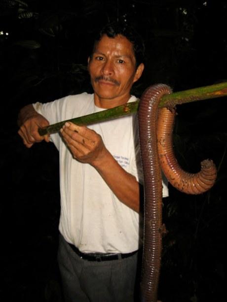 giant-worm-2