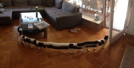 Cat-turns-into-a-cat-erpillar-after-walking-through-a-panoramic-photo-990x500