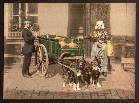dog_cart1