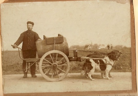 dog_cart2