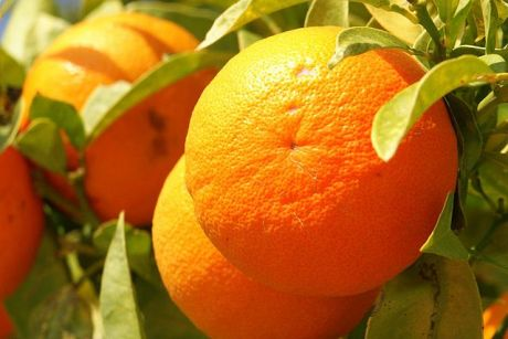 Orange_fruit_Cyprus_PICT8063