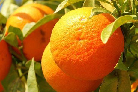 Orange_fruit_Cyprus_PICT8063
