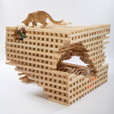 catscape-hok-architects-for-animals