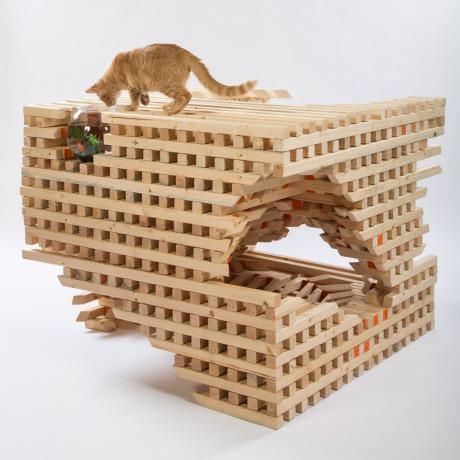 catscape-hok-architects-for-animals