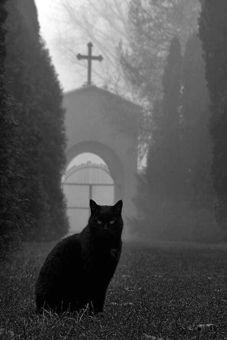 graveyard_queen