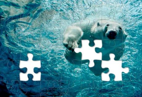 jigsaw-polar-475
