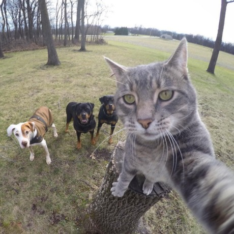 cat_selfies1