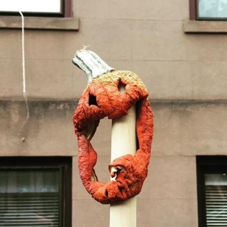 pumpkin_ntwilley