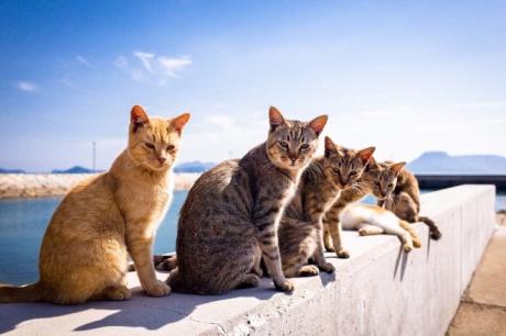 cat_album9
