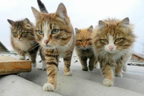 cats_album14